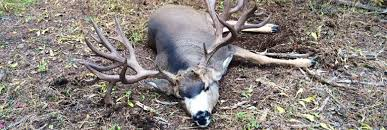 When Do Whitetails Shed Their Antlers by 14 When Do Whitetails Shed Their Antlers What S Your