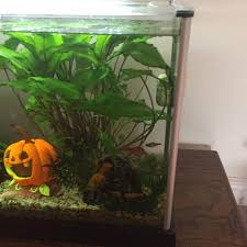 Extra Large Fish Tank Decorations by Find More Petmate Furrari Dog Kennel Extra Large For Sale At Up
