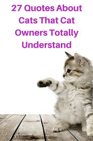 cat quotes 27 quotes about cats that cat owners totally understand catological