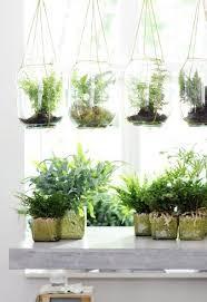 die richtige zimmerpflanze für das bad zimmerpflanzen