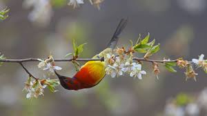 A Blue-throated Sunbird Feeding On Peaches In The Meili Snow ... Pin By Thomas On Tuc Tuc Food Truck Pinterest Food Amazoncom Sunbird Seasoning Mix Hot Spicy Szechwan 075 Oz 4 Sunbird Kitchen Orleans Ma 21st Century Restaurant In Cape Cod Soup Egg Drop Grocery Gourmet Kanguru Tacos Trucks 52 Head Of The Meadow Rd North Truro Nuts About Granola Cape Cod Magazinecape Magazine 107 Best Foodtruck Images Strollers Carts And Phad Thai Jane Wilkions World Page 3 Fried Rice 46