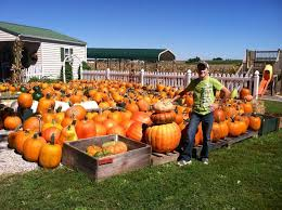 Pumpkin Farms In Belleville Illinois by Pumpkin Blossom Hill Pumpkin Patches 5483 State Route 154 Red