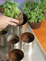 Plants For Bathroom Counter by Grow Your Own Kitchen Countertop Herb Garden Hgtv