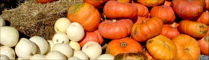 Pumpkin Picking Nj by Indian Acres Tree Farm