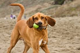 best low maintenance dogs best dogs for yor family