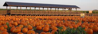 Silo Christmas Tree Farm Pumpkin Patch by Pumpkin Maze Attractions