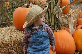 Puyallup Pumpkin Patch by Picha Farms Home Facebook