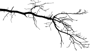 Free Download tree branch 8