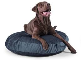 50 Inch Bean Bag Pet Bed