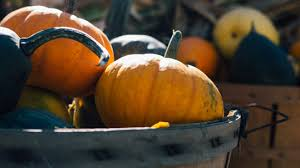 Pumpkin Farms In Channahon Illinois by The Steely Group 10 Great Fall Events In Chicagoland