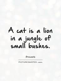 cat quotes a cat is a in a jungle of small bushes picture quotes