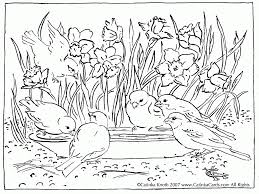 Daffodils Birds Birdbath Pen And Ink Drawing Coloring Page Printable Pdf By Catinka Knoth CatinkArts On Etsy