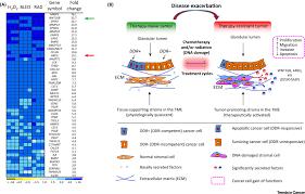 A Translational Innovation Forum Ppt Amphiregulin In Cancer Insights For Translational Medicine