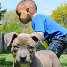 Cute Non Hypoallergenic Dogs by Got Allergies These Hypoallergenic Dog Breeds Are Your New Best