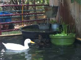 How To Build A No-Dig Backyard Pond For Under $70 - Hawk Hill Pond Makeover Feathers In The Woods Beautiful Backyard Landscape Ideas Completed With Small And Ponds Gone Wrong Episode 2 Part Youtube Diy Garden Interior Design Very Small Outside Water Features And Ponds For Fish Ese Zen Gardens Home 2017 Koi Duck House Exterior And Interior How To Make A Use Duck Pond Fodder Ftilizer Ducks Geese Build Nodig Under 70 Hawk Hill Waterfalls Call Free Estimate Of Duckingham Palace Is Hitable In Disarray Top Fish A Big Care