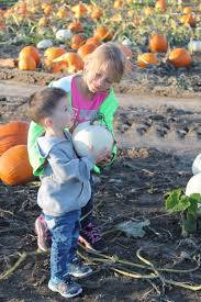 Pumpkin Farms In Wisconsin Dells by Dodge County Farm Has More Than Just Pumpkins Regional News