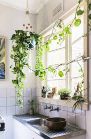 Plants For Bathroom Without Windows by See Why Reddit Is Freaking Out Over This Apartment Houseplants