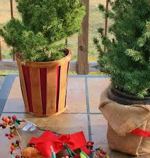Plantable Christmas Tree Ohio by Planting A Miniature Christmas Tree Dengarden