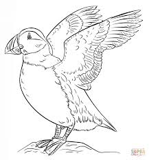 Atlantic Puffin Seabird Coloring Page