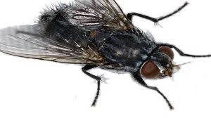Home Remedies For Flies | How To Get Rid Of Flies. - YouTube How To Get Rid Of Flies In Backyard Outdoor Goods Diy Using Pine Sol To Of House Youtube 25 Unique What Kills Fruit Flies Ideas On Pinterest Pest Keep Away Repellent Rid Rotline Do I Get Solana Center For 3 Ways Around Your Dogs Water And Food Bowls Fruit Kill Do You Chicken Coop For Happier Hens Coops Those Pesky Flies From Pnic Areas Easy Home Remedy Coping With The Fall The New York Times Outdoors Step By
