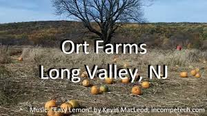 Pumpkin Picking In Chester Nj by Combo Trip Ort Farms And Chubb Park In Chester Youtube