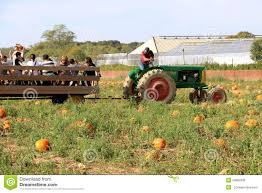Pumpkin Picking Farm Long Island Ny by Hay Ride In Long Island Ny Editorial Image Image 54862935