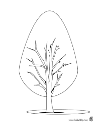 Fir Tree Coloring Pages