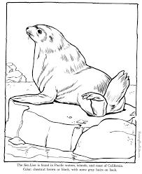 Sea Lion Coloring Pages