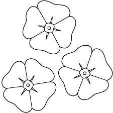 Anzac Poppy Flower Drawing Remembrance Day Coloring Page Many Interesting Cliparts