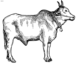 Bullock Coloring Page Kids Website For Parents