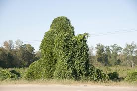 Pumpkin Patch Lawrence And Benton by Msu Study Finds Green In Stopping Kudzu Invasion Mississippi