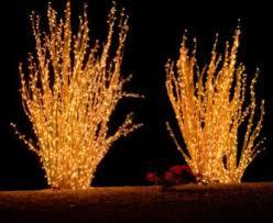 Outdoor Festive Lighting