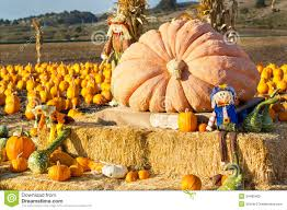Santa Cruz Pumpkin Patch 2015 by Half Moon Bay Ca Pictures Posters News And On Your