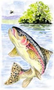 Oceanos Sinking Moss Hills by 36 Best Fishing Trip An Introduction To Fly Fishing And Trout