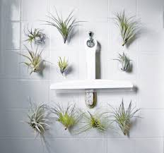 Best Plant For Bathroom by Articles With Plants For Bathroom India Tag Plants For Bathroom