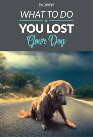 39 Best Dealing With Dog Loss Images On Pinterest | Dog Loss, A ... Its Going To Weird Some People Out A New Company Will Compost How Do I Keep My Backyard Free Of Murdered Possums Vermin Amazoncom 100 Wireless Pet Coainment System Wifi Radio Dog 39 Best Dealing With Loss Images On Pinterest Loss Man Admits Shooting And Burying Dog In Westside Jacksonville Bunny Rabbit Chases Around The Yard Youtube Backyard Playground Ideas For Your What Do Your Pets Remains After Death Where Bury Dead Pets Or Animals Bengaluru Citizen Matters Burying 2 Monthsold Bunny Doggie Solution Dogs Ideas