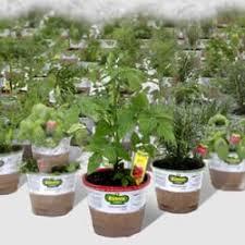 Pumpkin Patch 2920 Spring Tx by J U0026 J Nursery 41 Photos U0026 22 Reviews Nurseries U0026 Gardening