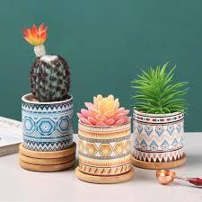 nordic ins simulation pflanze kaktus mini sukkulenten