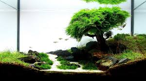 Aquascape Designs Pond Supplies Vancouver Products Aquarium Wood