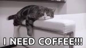 Cat INeed Coffee GIF