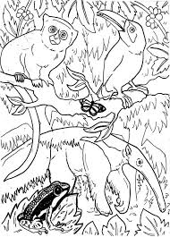 Amazing Rainforest Animals Coloring Page Print