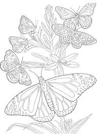 Coloring Book Pages For Adults In Butterfly