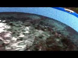 Tilapia Fish Tank Heater YouTube Love Of Aquaponics Pinterest