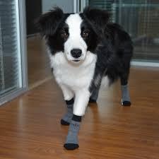 Dog Socks For Hardwood Floors Petco by Local Flooring Company In Los Angeles Titandish Decoration