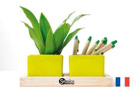 plante de bureau comment bien choisir sa plante de bureau avec made in europamade