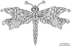 Dragonfly Coloring Pages For Adults 18 N Page Nywestierescue Printable Me 88 Free Kid