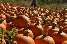 Walden Farm Pumpkin Patch Smyrna Tn by Laberintos De Maíz En El Centro De Tennessee U2013 Hola Tennessee