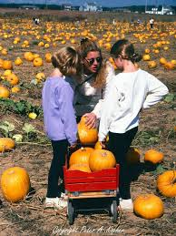 Pumpkin Picking Corn Maze Long Island Ny by Best 25 Pumpkin Picking Ny Ideas On Pinterest Eater Nyc