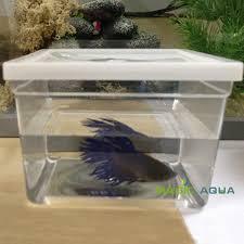 aquarium poisson prix 50 pcs lote mini betta poissons combats réservoir de poissons d