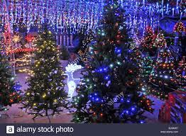 Eustis Christmas Tree Farm by Christmas Trees Stock Photos U0026 Christmas Trees Stock Images Alamy